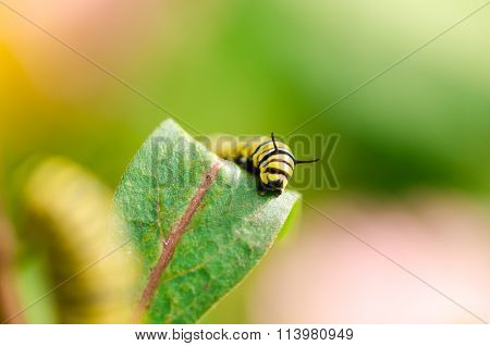 macro image of butterfly caterpillar