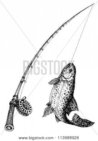 Fishing rod and fish isolated