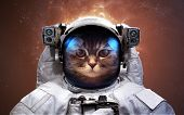 Cat Astronaut in outer space. Spacewalk. Elements of this image furnished by NASA poster