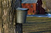 Old fashioned maple bucket used to tap syrup in early spring in New England. Many farms still tap for maple syrup in early spring around March as a source of their income. The maple syrup industry is still a major component of New England. poster