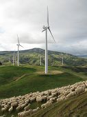 Wind farm complete with sheep in a field on the top of hill in New Zealand poster