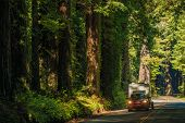 California Camper Journey. Small SUV with Compact Travel Trailer on the Redwood Highway in Northern California USA. poster