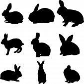 Rabbit Job Silhouettes carrot collection animal wild magic poster