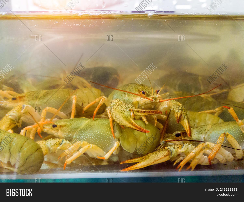 Live Crayfish Aquarium Image & Photo (Free Trial) | Bigstock