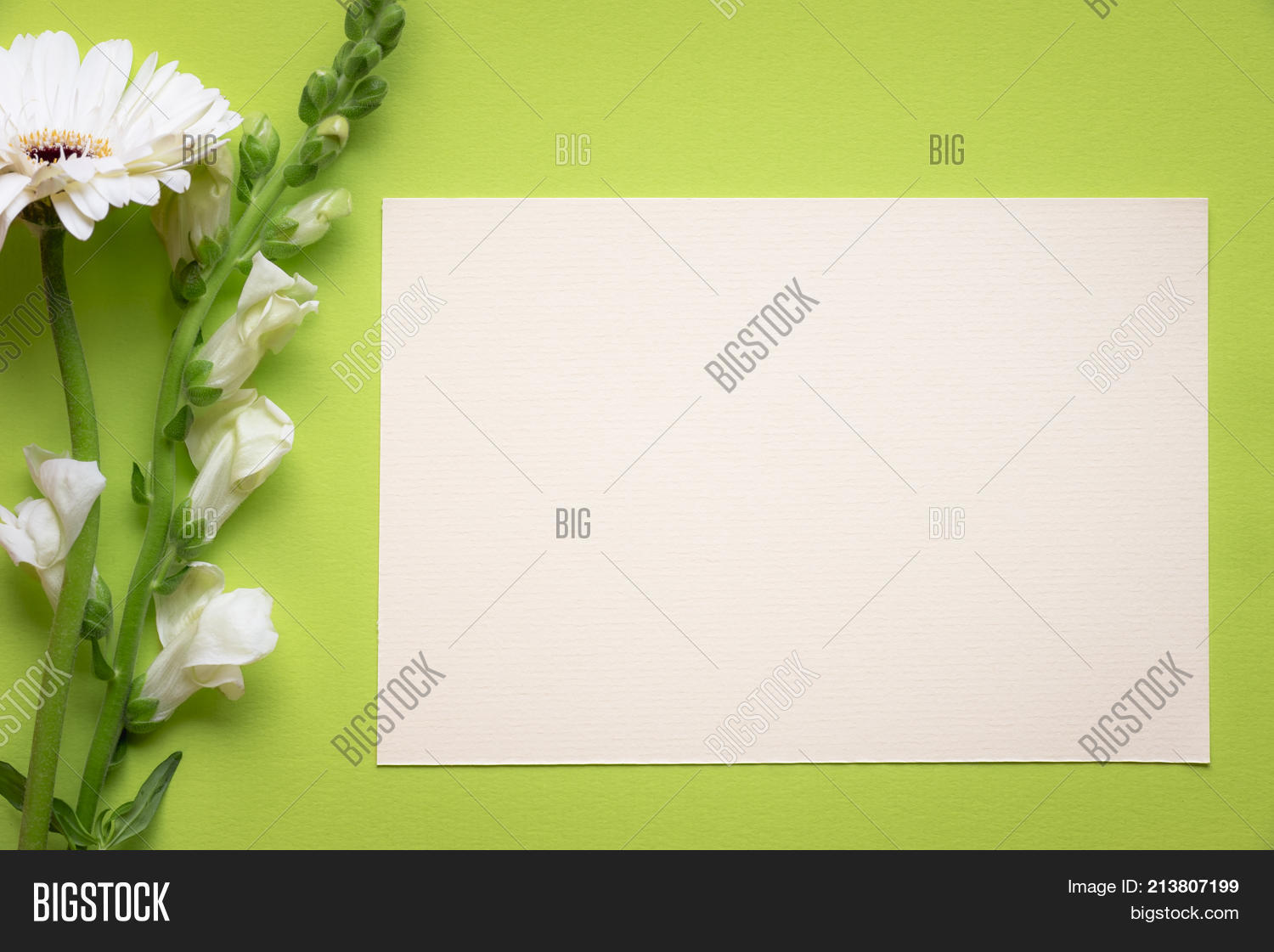 White Flowers Message Card Image Photo Bigstock