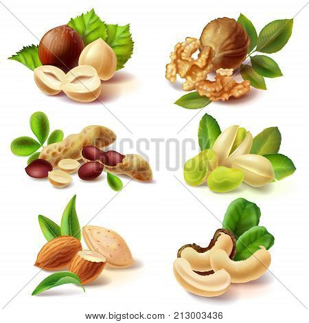 Set of different peeled and with peel and leaves nuts realistic vector illustrations isolated on white background. Full and cracked hazelnut, walnut kernel halves, peanuts, pistachio, almond, cashew