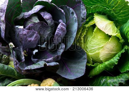 Green And Violet Cabbages .  Assorted Of Cabbages Background