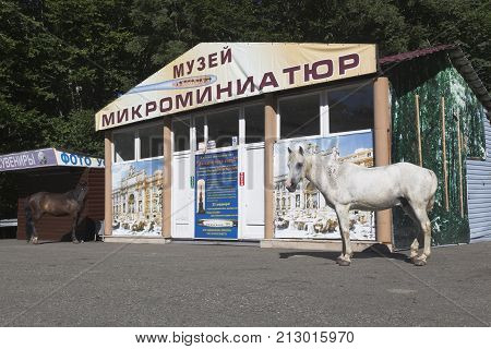 Sochi, Hosta District, Krasnodar region, Russia - July 14, 2016: Horses strolling near of the museum of miniatures on the mountain Big Ahun in Hosta district of Sochi
