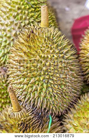 Group of Durian. tropical fruit.durian on the truck for sell. closeup durian. durian which is smelly sweet Thai fruit. durian in fruit market.