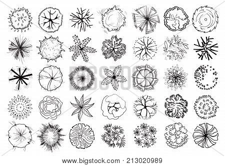 Various trees, bushes and shrubs, top view for landscape design plan. Set of vector illustrations, isolated black on white background.