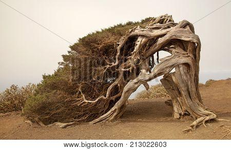 La Sabina, The Juniper Tree