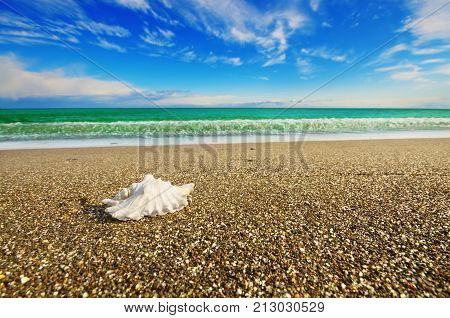 Shell On Beach With Tide At Background