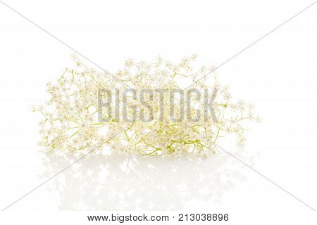 Healthy elderberry flower blossoms on a white background. Natural remedy.