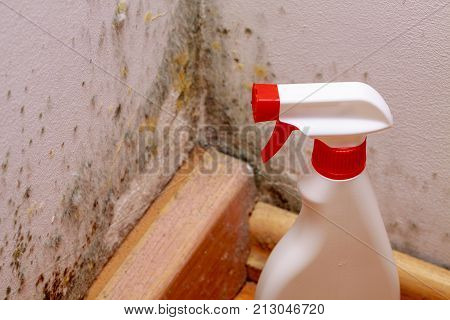 Spray to remove mould on the wall in house. Remove the mold problem.
