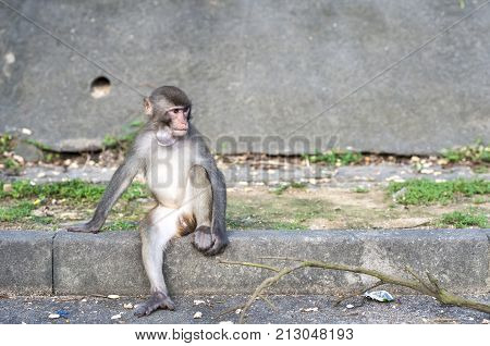 Rhesus Macaque with object stuck its throat, Hong Kong poster