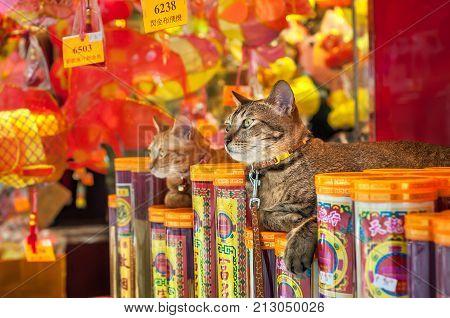 HONG KONG - SEPT 20, 2013 - Two cats sitting outside a Hong Kong store