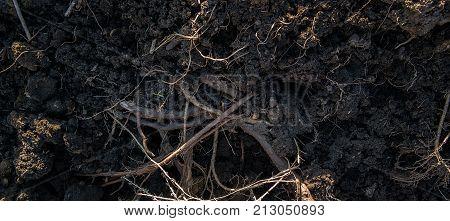 Roots in soil. Soil background. Soil texture. Roots. Nature background. Earth texture. Earth background. Grunge soil.