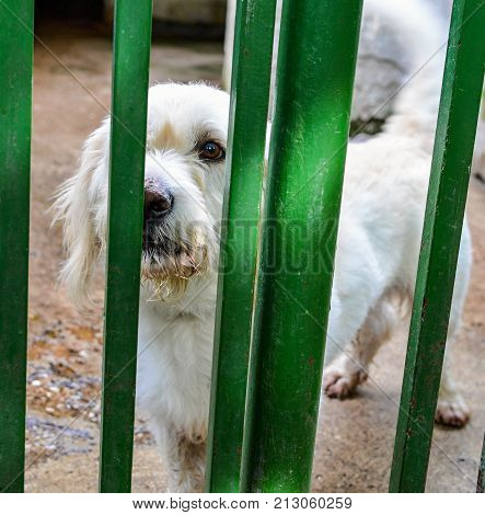 Sad dog in a shelter waiting for a new home.