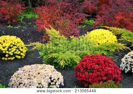 Flower bed with different types of flowers during flowering