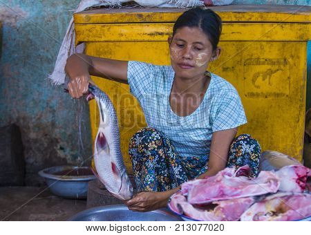 SHAN STATE MYANMAR - SEP 06 : Burmese woman selling fishes in a market in Shan state Myanmar on September 06 2017. Agriculture is the main industry in Myanmar