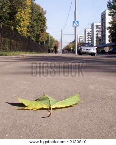 Autumn Leaf On The Footway