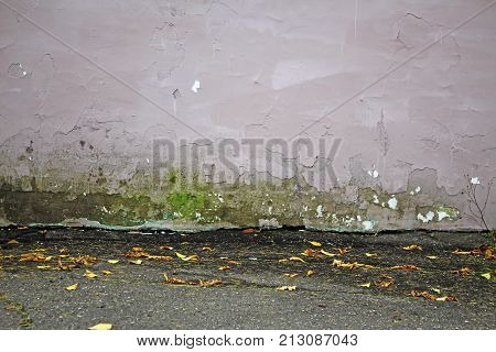 a gray dilapidated wall with peeling plaster a patch of green moss and wet asphalt with yellow autumn leaves