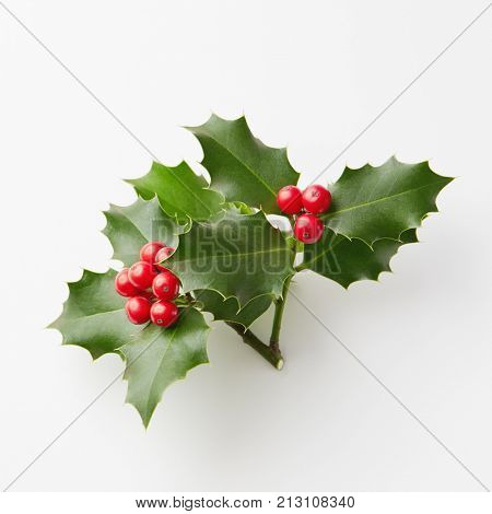 Christmas Holly With Red Berries. Traditional festive decoration.