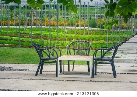 Three black wooden chair and one table setting on concrete floor at beautiful outdoor garden with green natural background.