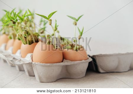 seedling plants in eggshells eco gardening montessori education reuse concept