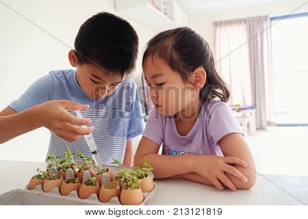 Mixed Asian children watering seedling plant in eggshells eco gardening montessori education reuse concept