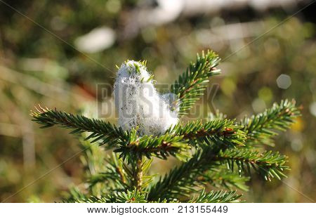 close photo of smell repellent against deer on the top of the tree