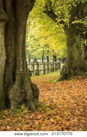 Vibrant Colorful Autumn Fall Landscape Image In Dense Woodland Forest