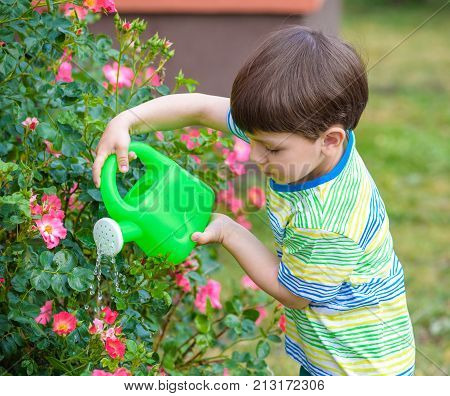 Cute little boy watering plants and roses with watering can in the garden. Child dressed in light summer closes and colourful t-shirt smiling and having fun. Activities with children outdoors.