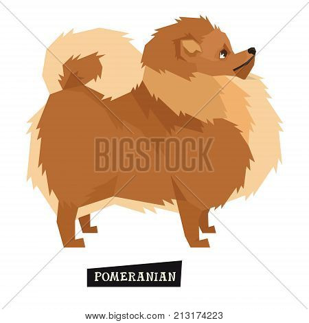 Dog collection Pomeranian Geometric style Isolated object