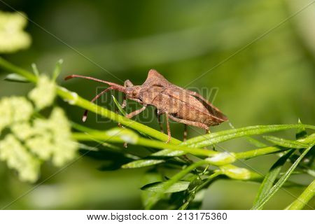 Stink bug on nature . In the park in nature