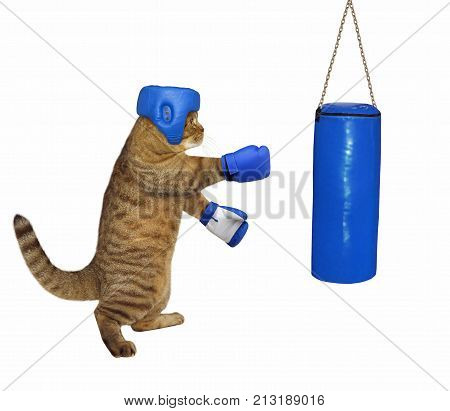 The cat in boxing gloves and a headgear is next to a punching bag. White background.