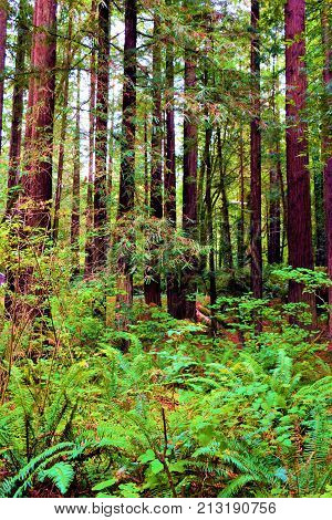 Rural meadow of ferns surrounding a pine forest taken in a temperate rain forest