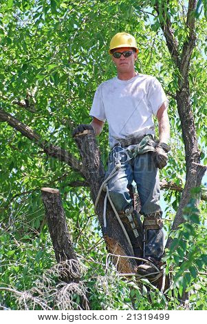 Tree Trimmer