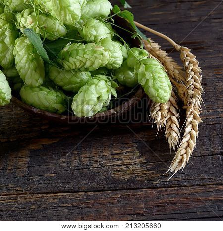 Hops twig over old wooden table background. Vintage style. Fresh-picked whole hops close-up