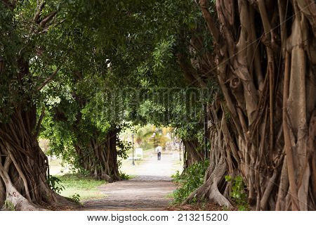 Branchy Trees And A Path Through Them, Trinidad, Sancti Spiritus, Cuba. Copy Space For Text.
