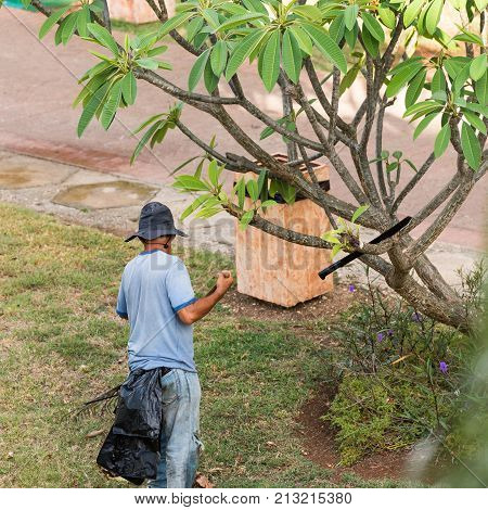 The Gardener Works In The Garden, Varadero, Matanzas, Cuba. Close-up.