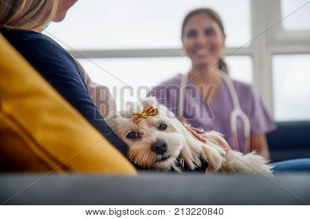 Young hispanic woman working as veterinary, vet talking to dog owner on house call. Animal doctor during visit of ill pet at home.