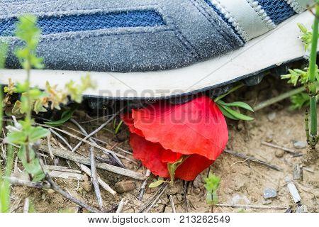 A shoe of a man destroy a poppy flower