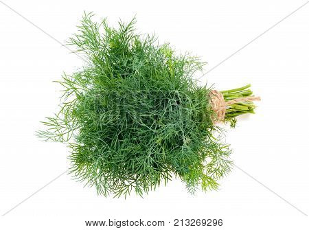 The fresh dill Isolated on white background
