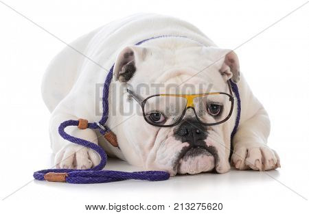 smart dog doing dog obedience training on white background