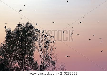 A Flock Of Birds On A Background Of Deep Red Sunset