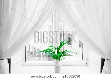 White sheer curtain texture background in daylight atmosphere of apartment's interior and green flower in flowerpot on the window sill. Black and white transparent curtain background.Curtain made of a light fabric that filters the light entering a room.