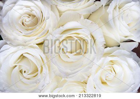 Wedding white flowers, awesome roses. White roses fullscreen background.