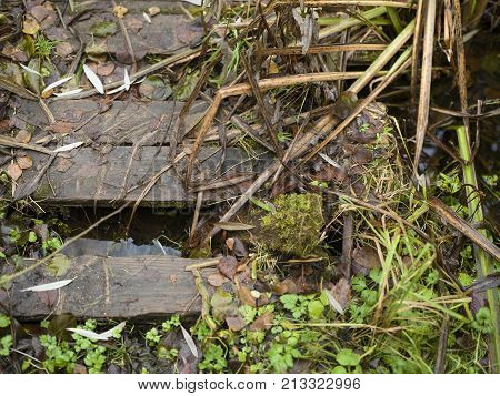 Small wooden bridge with slippery steps over water daytime closeup