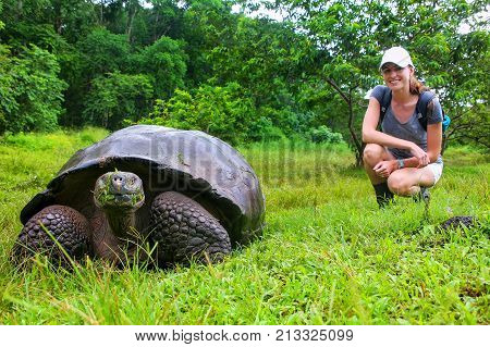 Galapagos Giant Tortoise With Young Woman (blurred In Background) Sitting Next To It On Santa Cruz I